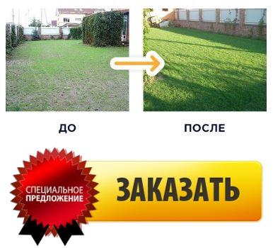купить жидкий газон в казани